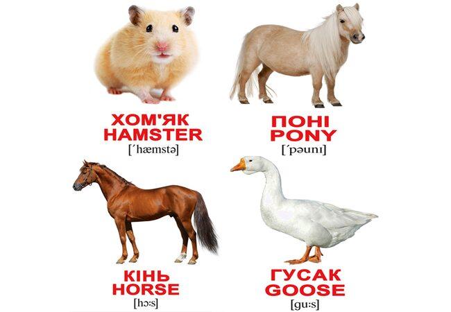 Мини-карточки украинско-английские «Домашние животные», 40