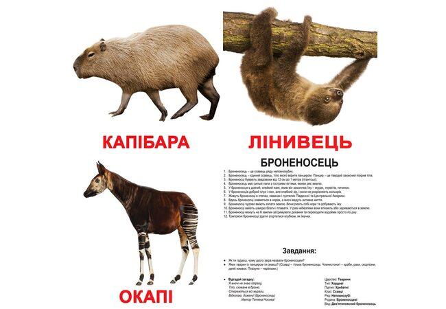 Большие украинские карточки с фактами «Экзотические животные», 20