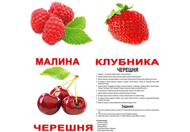 Большие русские карточки с фактами «Ягоды», 20