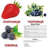 Большие украинские карточки с фактами «Ягоды».Ламинированные.