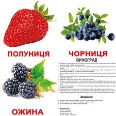 Большие украинские карточки с фактами «Ягоды», 20