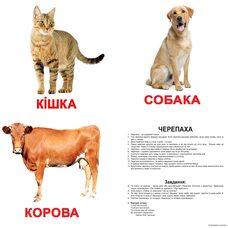 Большие украинские карточки с фактами «Домашние животные». Ламинированные.