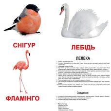 Большие украинские карточки с фактами «Птицы». Ламинированные.