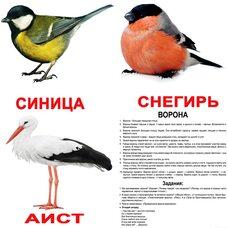 Большие русские карточки с фактами «Птицы».Ламинированные.