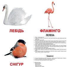 Большие украинские карточки с фактами «Птицы», 20