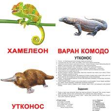 Большие русские карточки с фактами «Экзотические животные». Ламинированные.