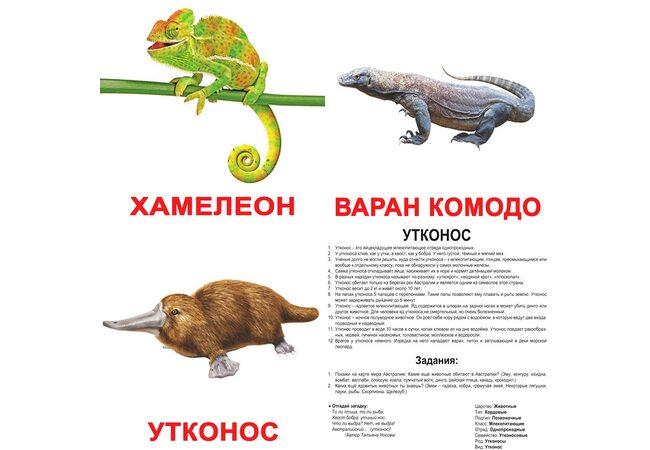 Большие русские карточки с фактами «Экзотические животные», 20