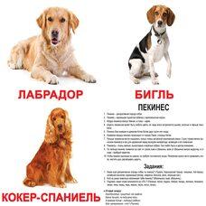 Большие русские карточки с фактами «Породы собак», 20