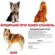 Большие украинские карточки с фактами «Породы собак», 20
