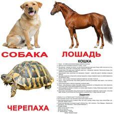 Большие русские карточки с фактами «Домашние животные», 20