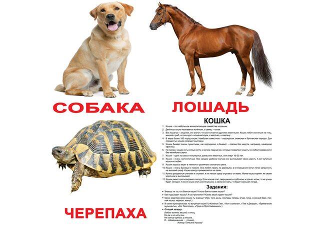 Большие русские карточки с фактами «Домашние животные».Ламинированные.