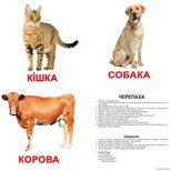 Большие украинские карточки с фактами «Домашние животные», 20