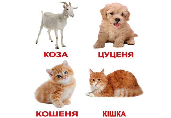 Украинские карточки «Домашние животные с фактами» (МИНИ), 40