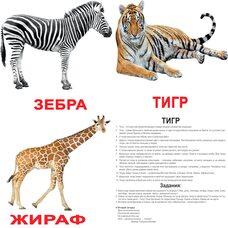 Большие русские карточки с фактами «Дикие животные», 20