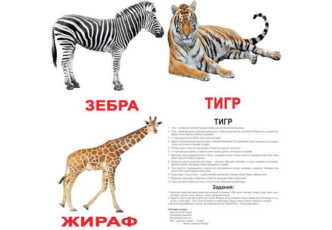 Большие русские карточки с фактами «Дикие животные».Ламинированные.