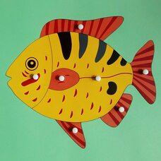 Строение рыбки