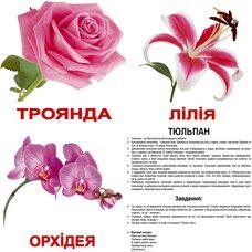 Большие украинские карточки с фактами «Цветы», 20