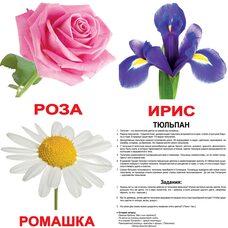 Большие русские карточки с фактами «Цветы».Ламинированные.