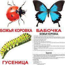 Большие русские карточки с фактами «Насекомые».Ламинированные.