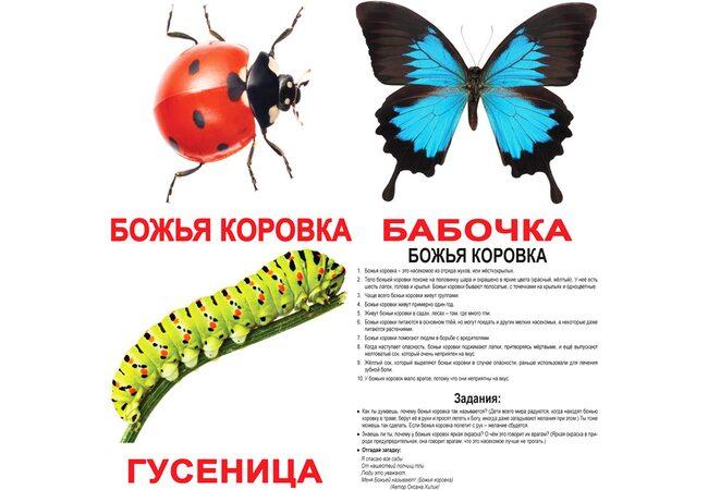 Большие русские карточки с фактами «Насекомые», 20