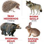 Мини-карточки украинско-английские «Дикие животные», 40