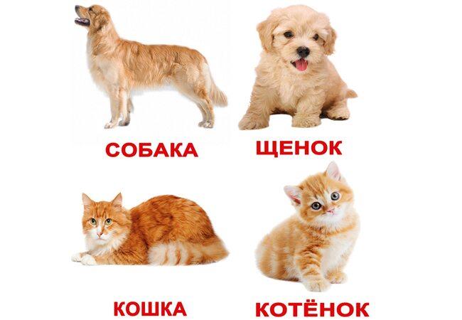 Русские карточки «Домашние животные с фактами» (МИНИ), 40