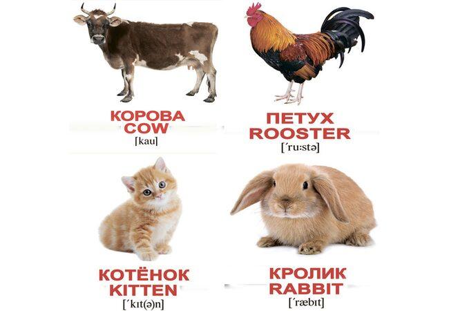 Мини-карточки «Домашние животные/Domestic animals», 40