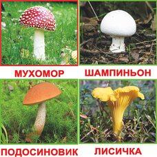 Русские карточки «Грибы» (МИНИ), 20