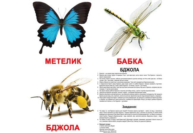 Большие украинские карточки с фактами «Насекомые», 20
