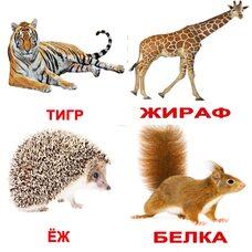 Русские карточки «Дикие животные с фактами» (МИНИ), 40