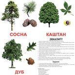 Большие русские карточки с фактами «Деревья».Ламинированные.