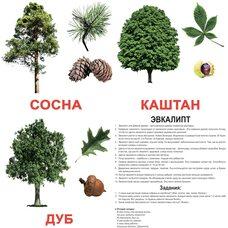 Большие русские карточки с фактами «Деревья», 20