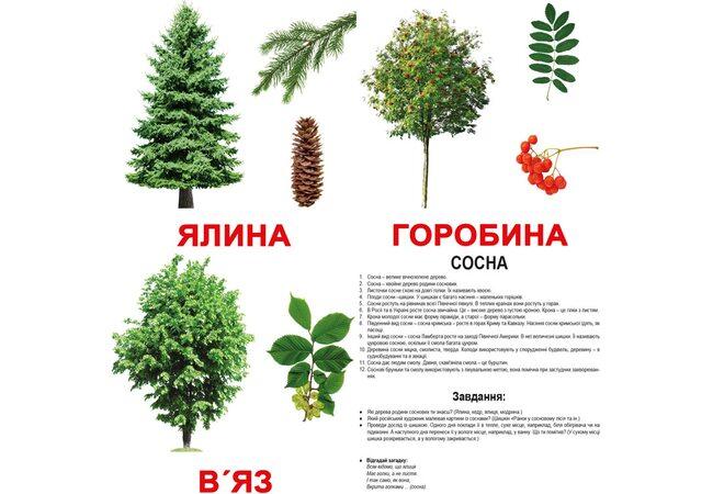 Большие украинские карточки с фактами «Деревья». Ламинированные.