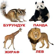 Украинские карточки «Дикие животные с фактами» (МИНИ), 40