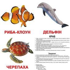 Большие украинские карточки с фактами «Обитатели воды», 20