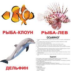 Большие русские карточки с фактами «Обитатели воды».Ламинированные.