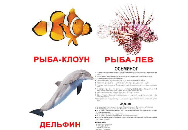 Большие русские карточки с фактами «Обитатели воды», 20