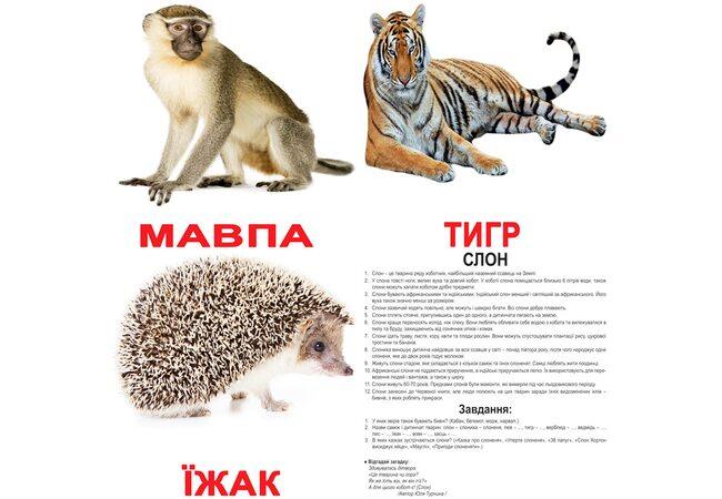 Большие украинские карточки с фактами «Дикие животные», 20