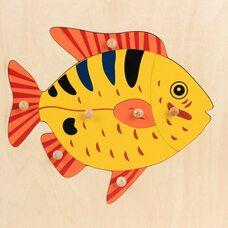 Строение рыбки №2