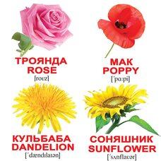 Мини-карточки украинско-английские «Цветы», 20