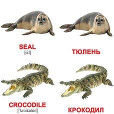 Мини-карточки «Водные животные/Water animals», 40