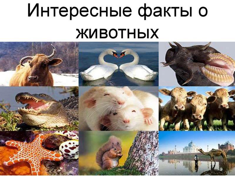 Фото 1. Природа и человек